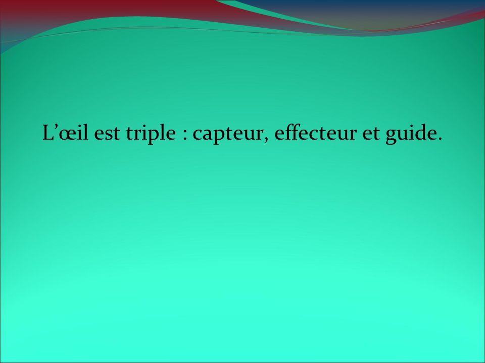 L'œil est triple : capteur, effecteur et guide.