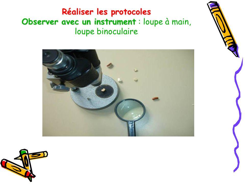 Réaliser les protocoles Observer avec un instrument : loupe à main, loupe binoculaire