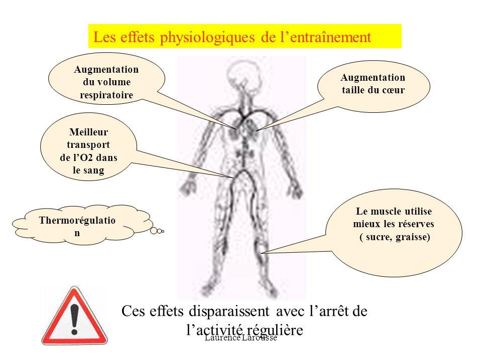 Les effets physiologiques de l'entraînement