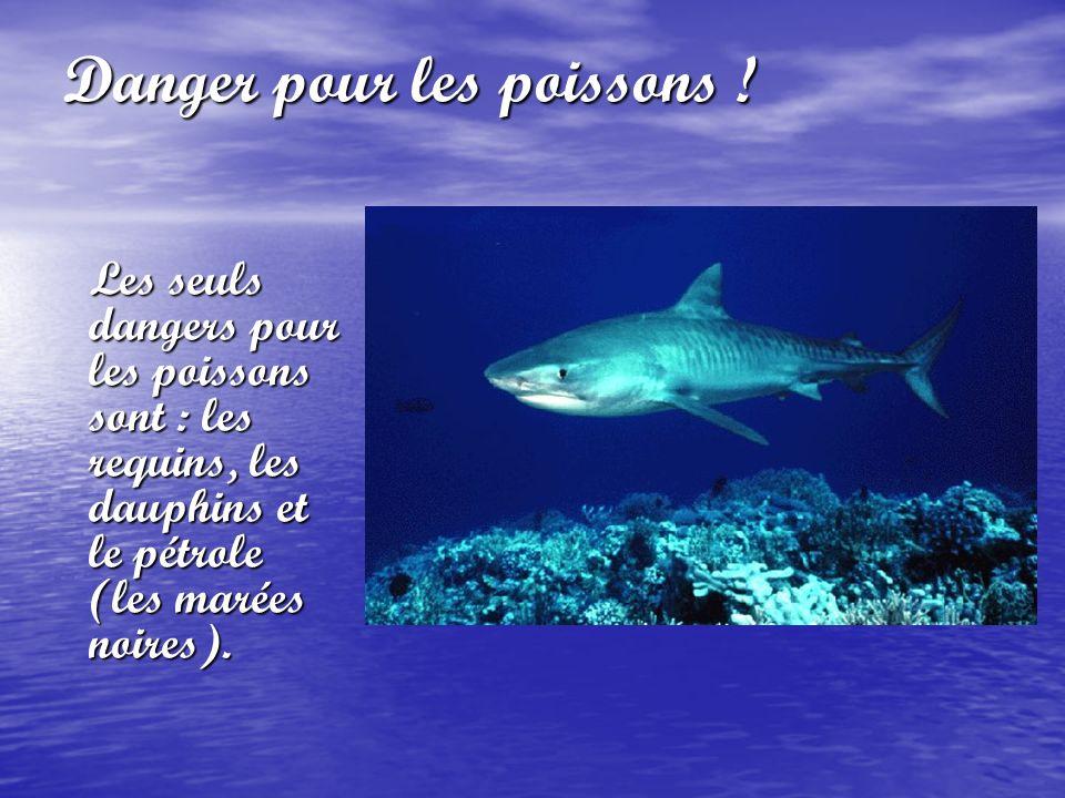 Danger pour les poissons !