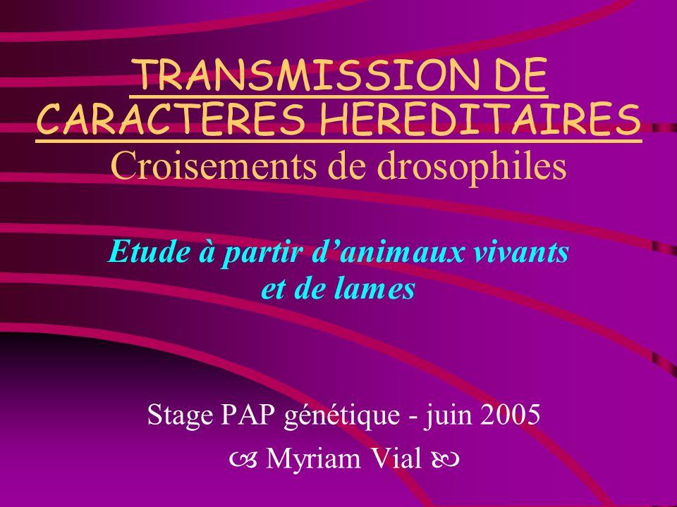 Stage PAP génétique - juin 2005  Myriam Vial 