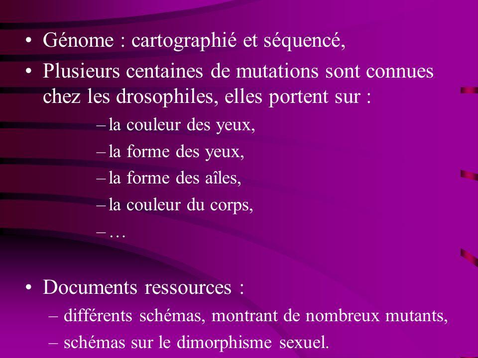 Génome : cartographié et séquencé,
