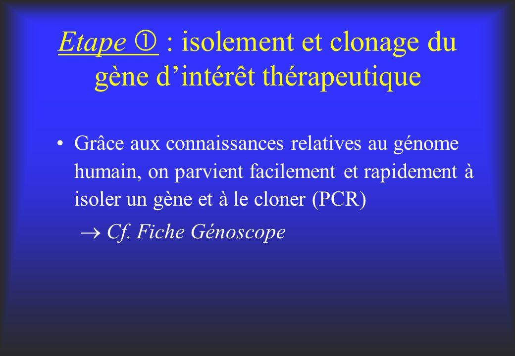 Etape  : isolement et clonage du gène d'intérêt thérapeutique