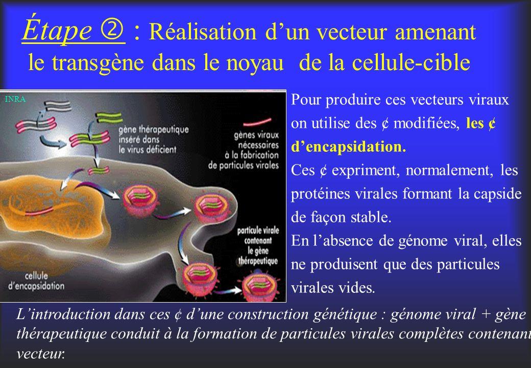 Étape  : Réalisation d'un vecteur amenant le transgène dans le noyau de la cellule-cible