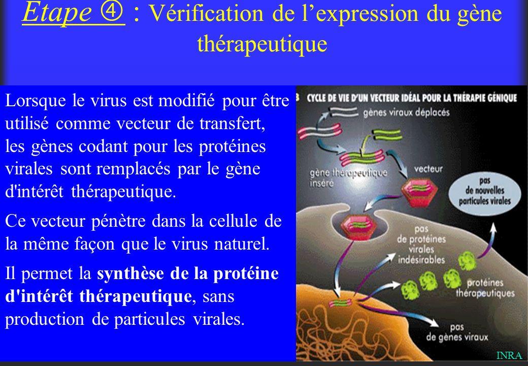 Étape  : Vérification de l'expression du gène thérapeutique