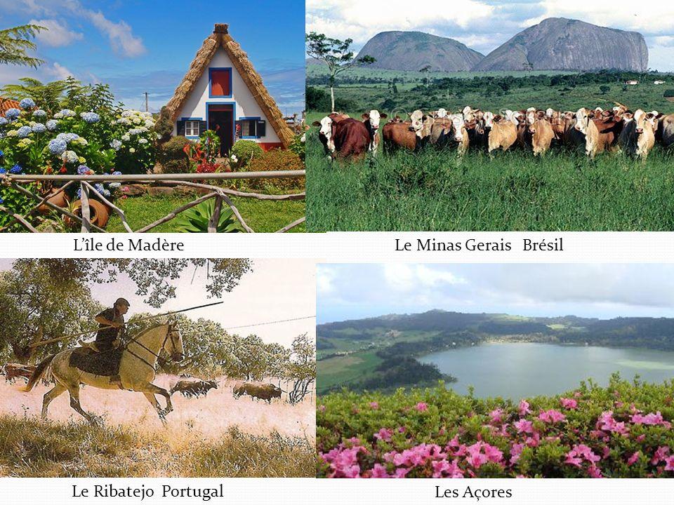 L'île de Madère Le Minas Gerais Brésil Le Ribatejo Portugal Les Açores