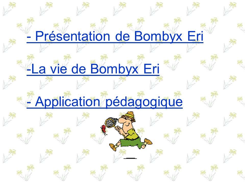 - Présentation de Bombyx Eri -La vie de Bombyx Eri - Application pédagogique