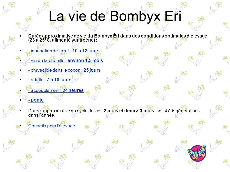 La vie de Bombyx Eri Durée approximative de vie du Bombyx Éri dans des conditions optimales d élevage (23 à 25°C, alimenté sur troène) :