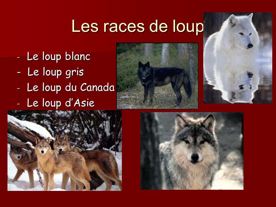 Les races de loup Le loup blanc - Le loup gris Le loup du Canada