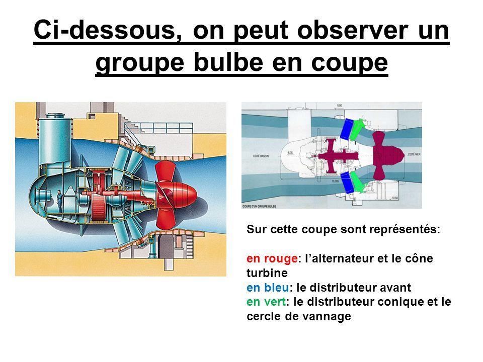Ci-dessous, on peut observer un groupe bulbe en coupe