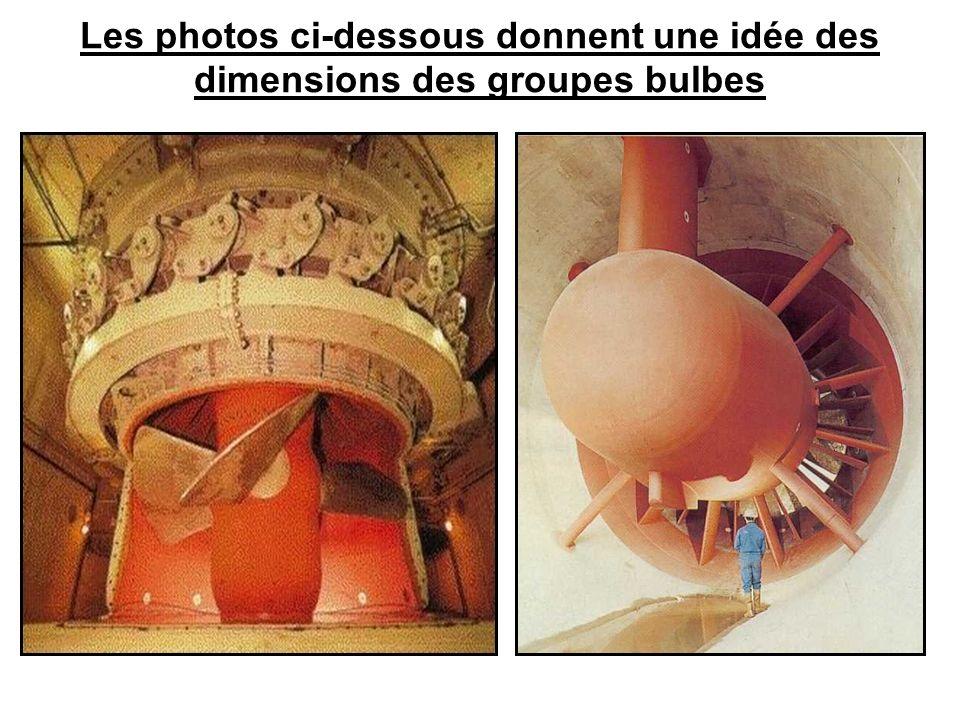 Les photos ci-dessous donnent une idée des dimensions des groupes bulbes