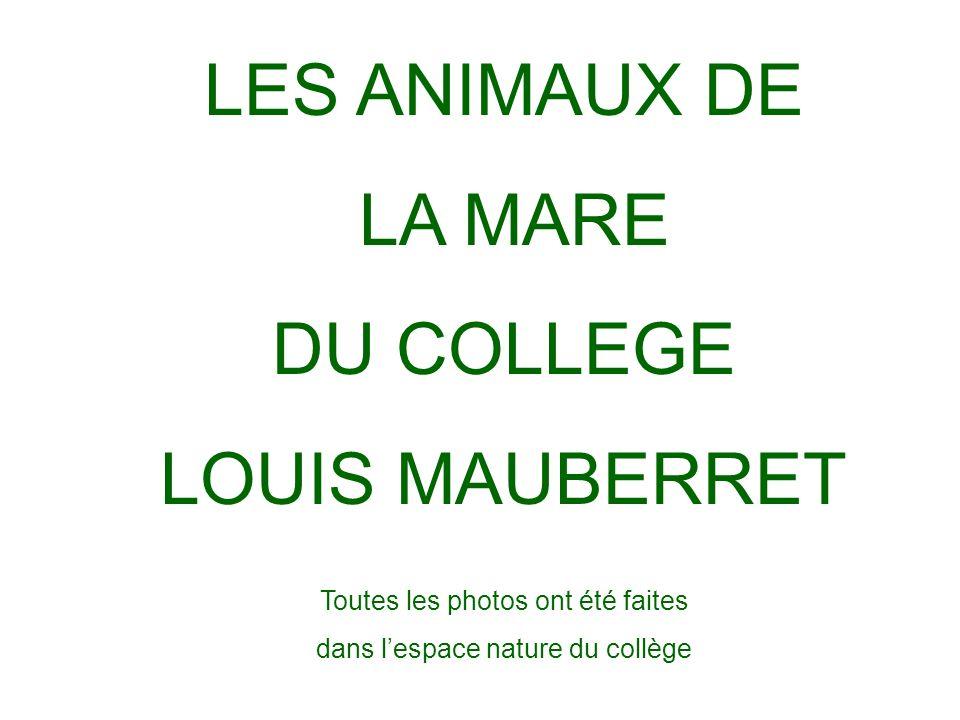 LES ANIMAUX DE LA MARE DU COLLEGE LOUIS MAUBERRET