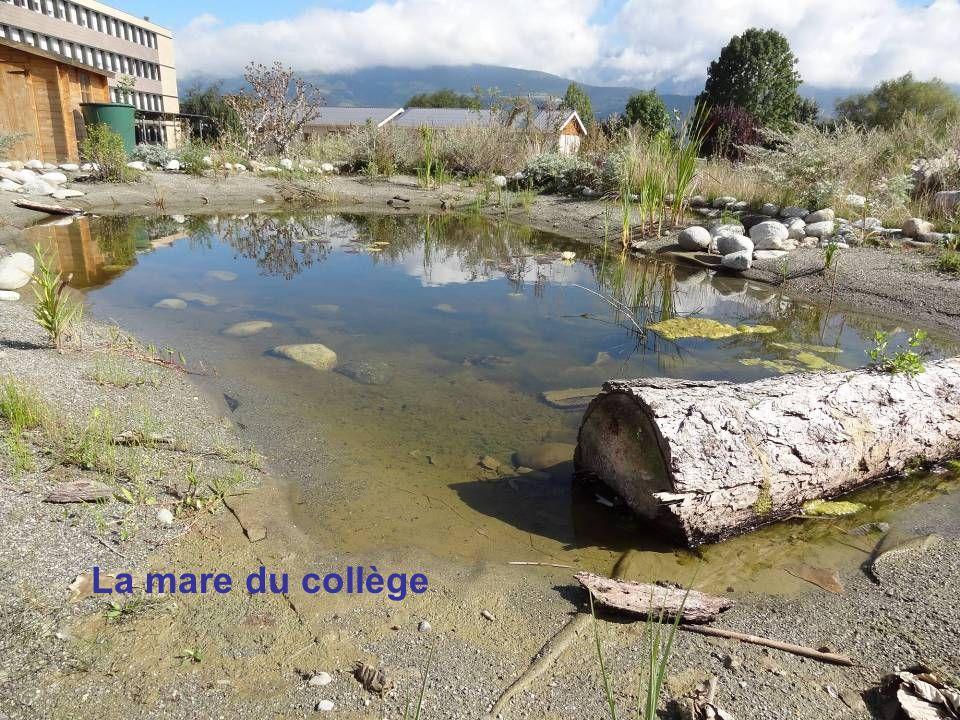 La mare du collège