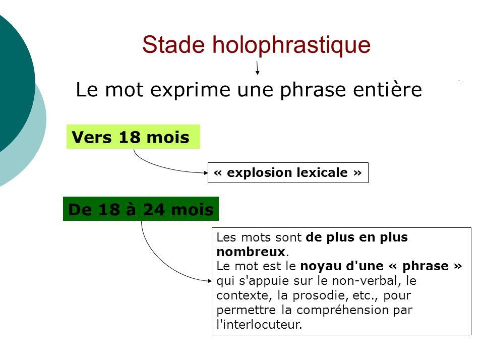 Stade holophrastique Le mot exprime une phrase entière Vers 18 mois
