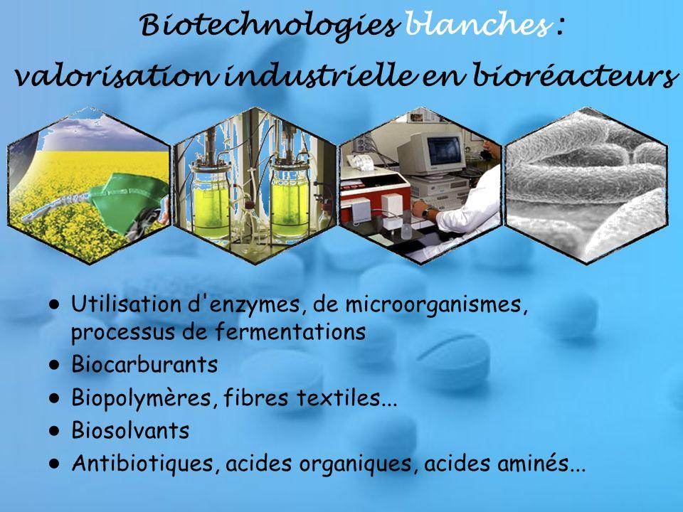 Biotechnologies blanches : valorisation industrielle en bioréacteurs