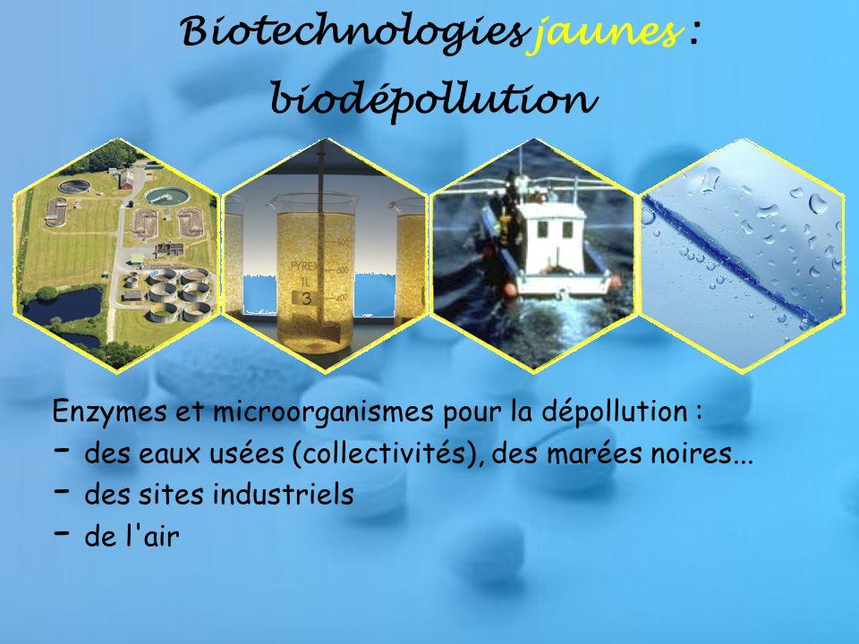 Biotechnologies jaunes : biodépollution