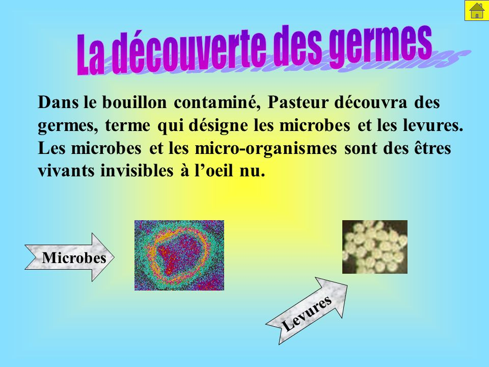 La découverte des germes