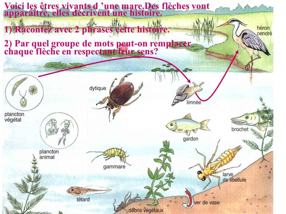 Voici les êtres vivants d 'une mare