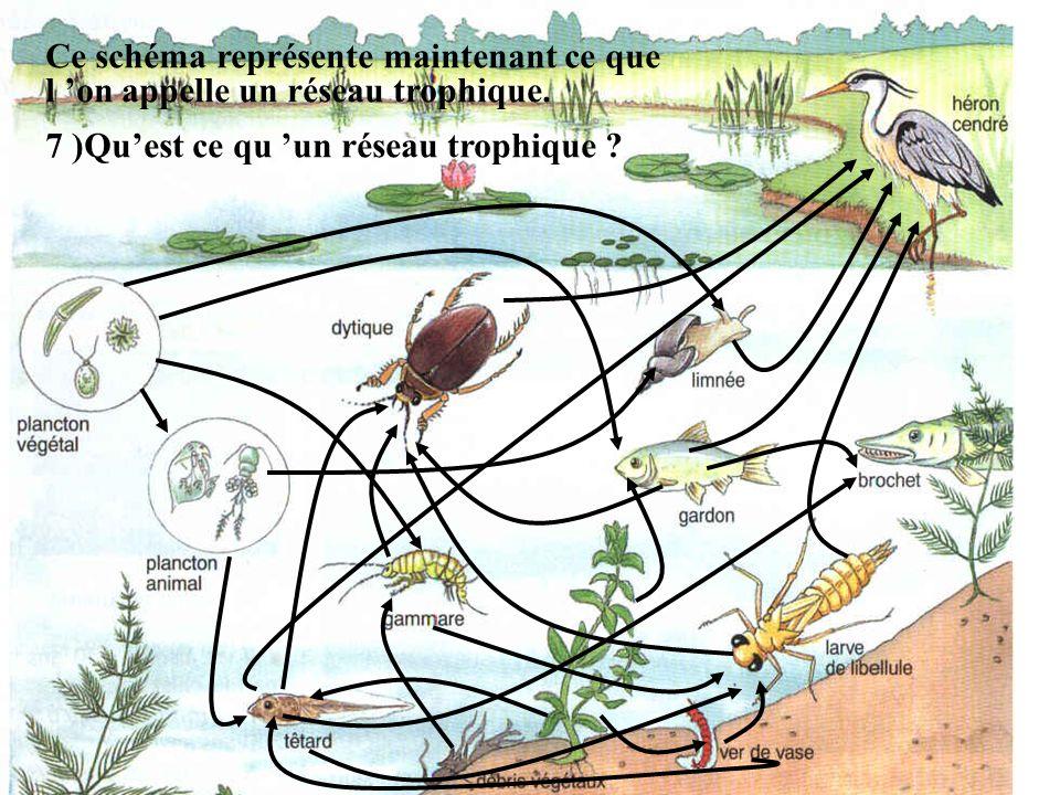 Ce schéma représente maintenant ce que l 'on appelle un réseau trophique.