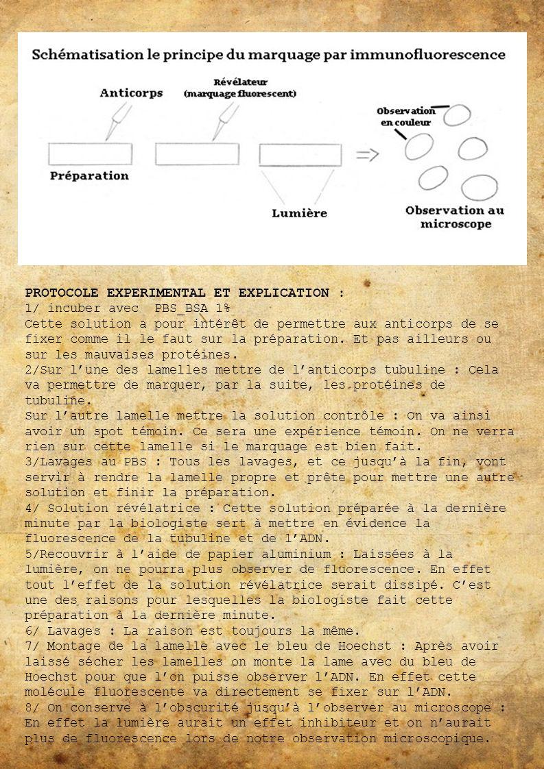PROTOCOLE EXPERIMENTAL ET EXPLICATION :
