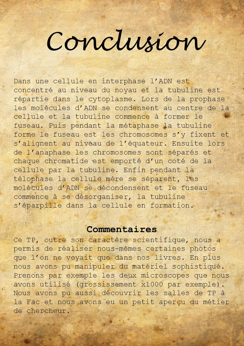 Conclusion Commentaires