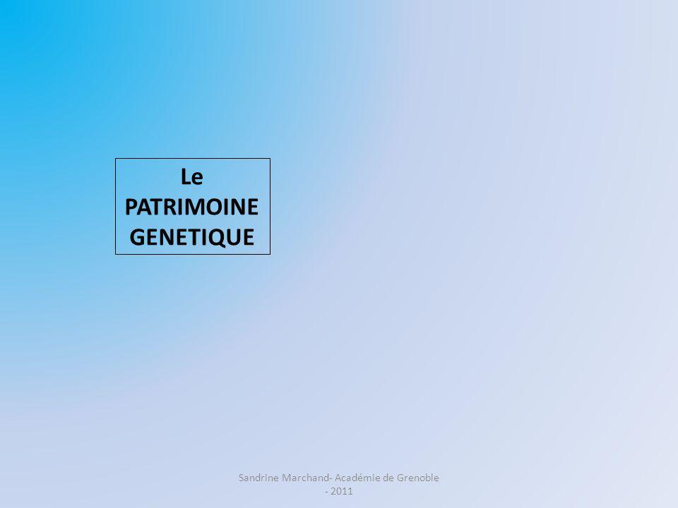 Le PATRIMOINE GENETIQUE