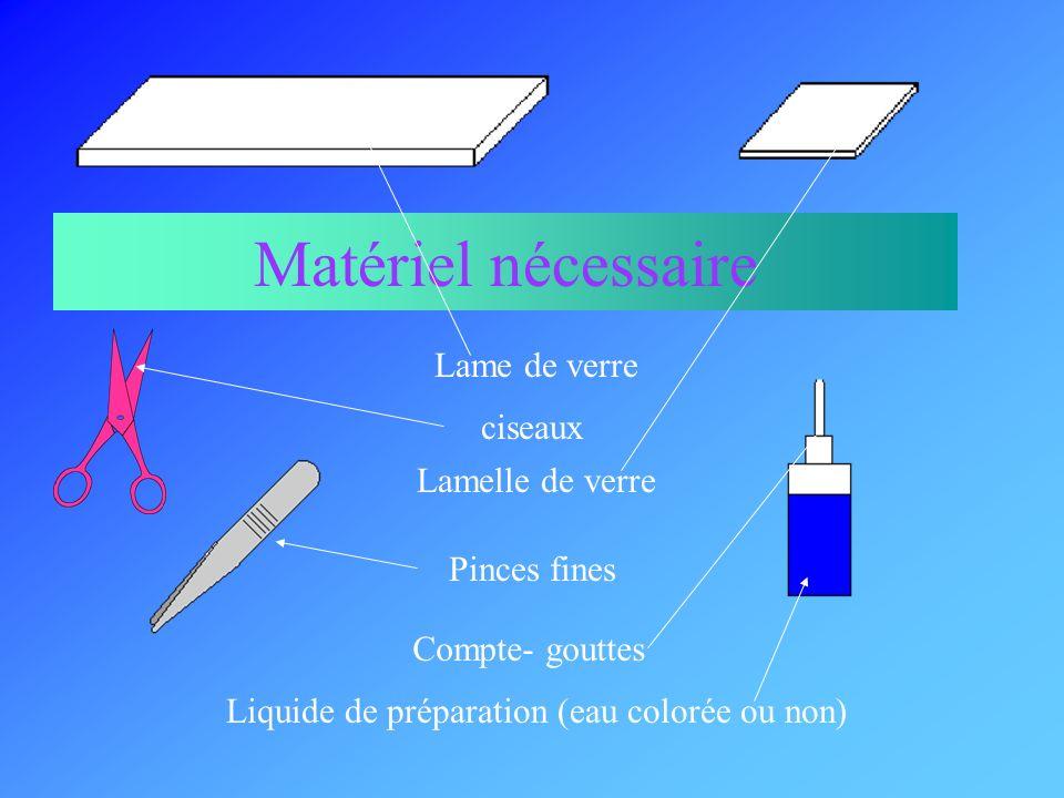 Liquide de préparation (eau colorée ou non)