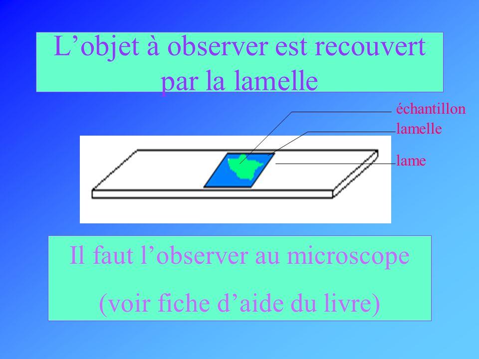 L'objet à observer est recouvert par la lamelle