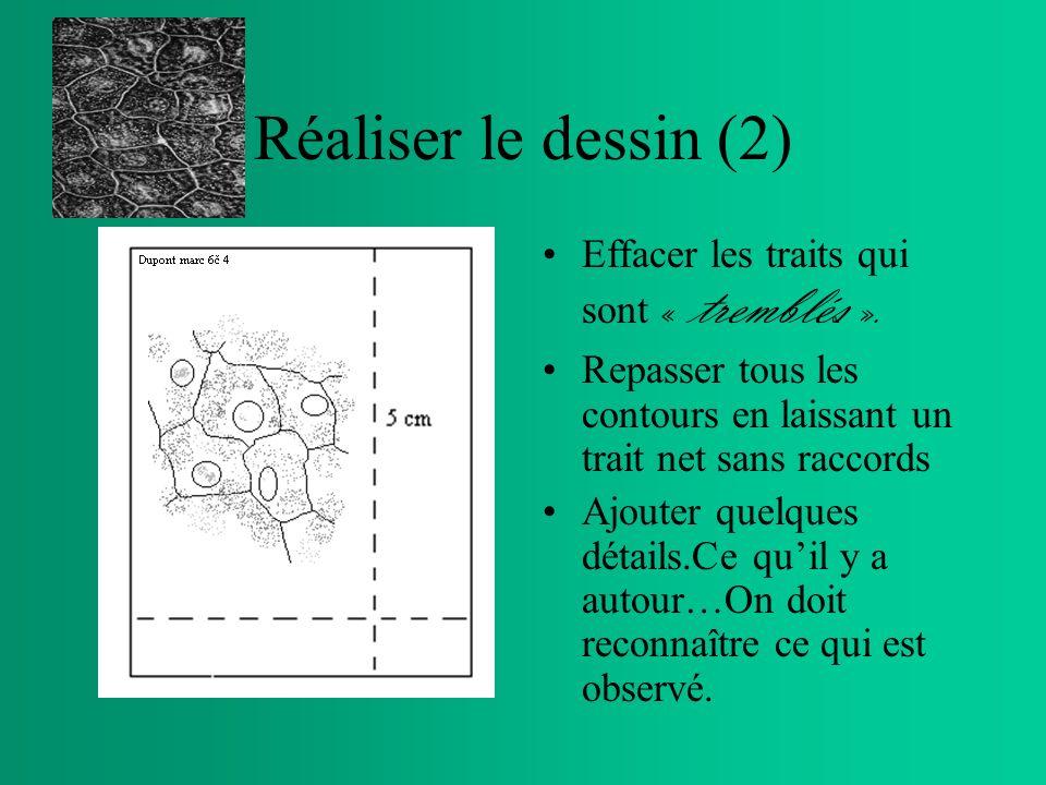 Réaliser le dessin (2) Effacer les traits qui sont « tremblés ».