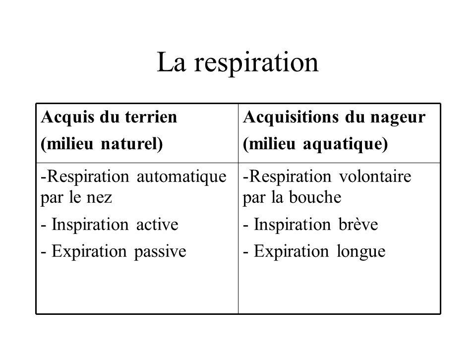 La respiration Respiration volontaire par la bouche Inspiration brève