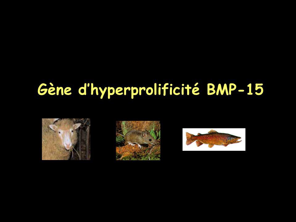 Gène d'hyperprolificité BMP-15