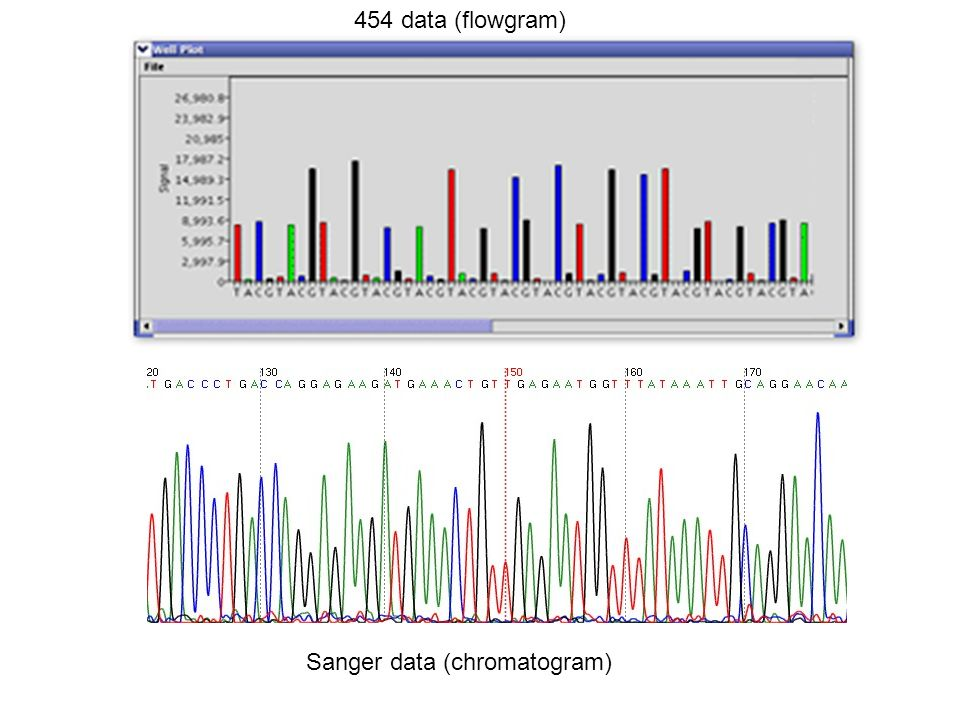 454 data (flowgram) Sanger data (chromatogram)