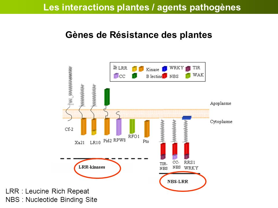 Les interactions plantes / agents pathogènes