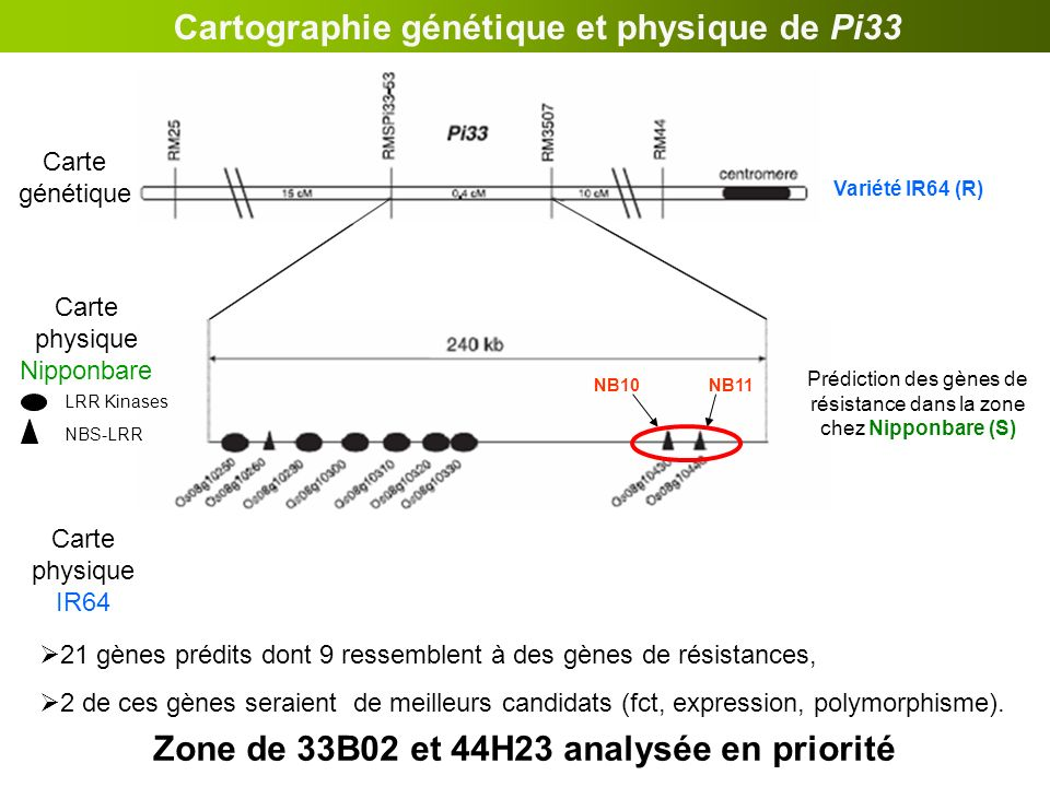 Cartographie génétique et physique de Pi33