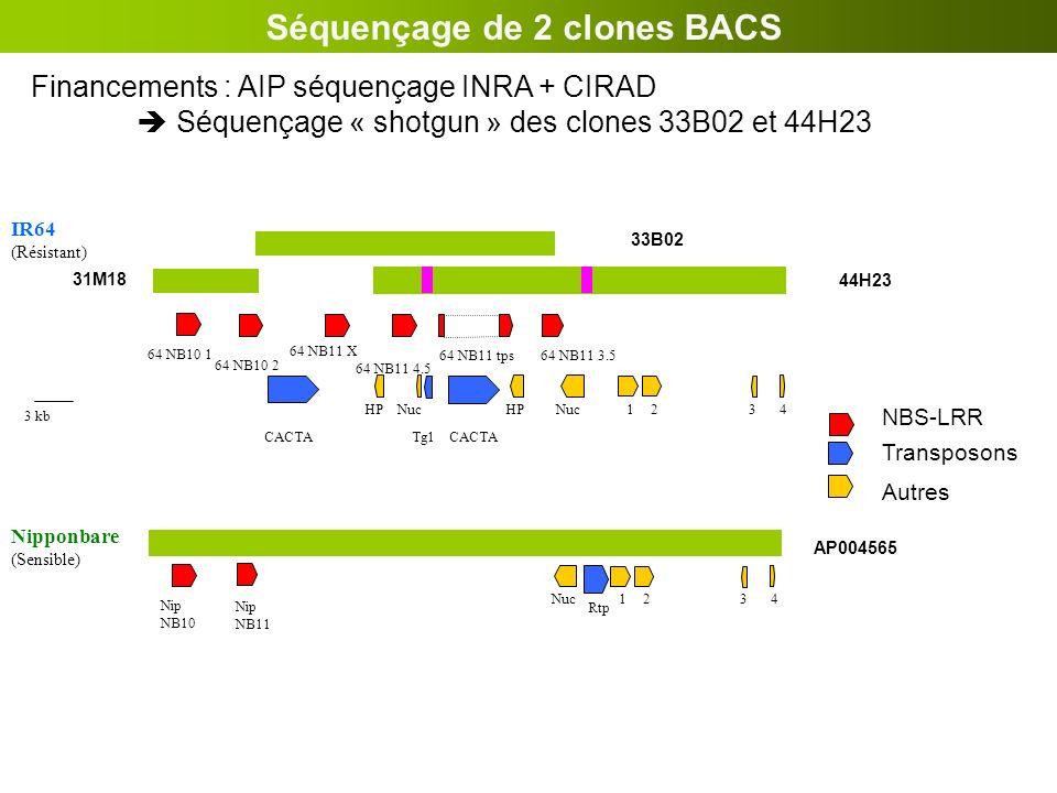 Séquençage de 2 clones BACS