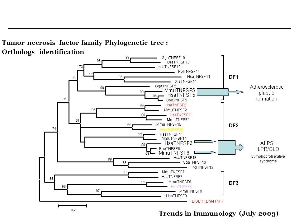 Tumor necrosis factor family Phylogenetic tree :