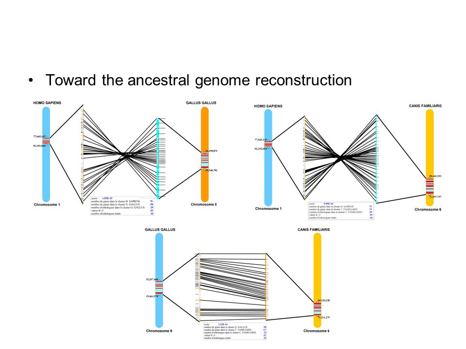 Toward the ancestral genome reconstruction