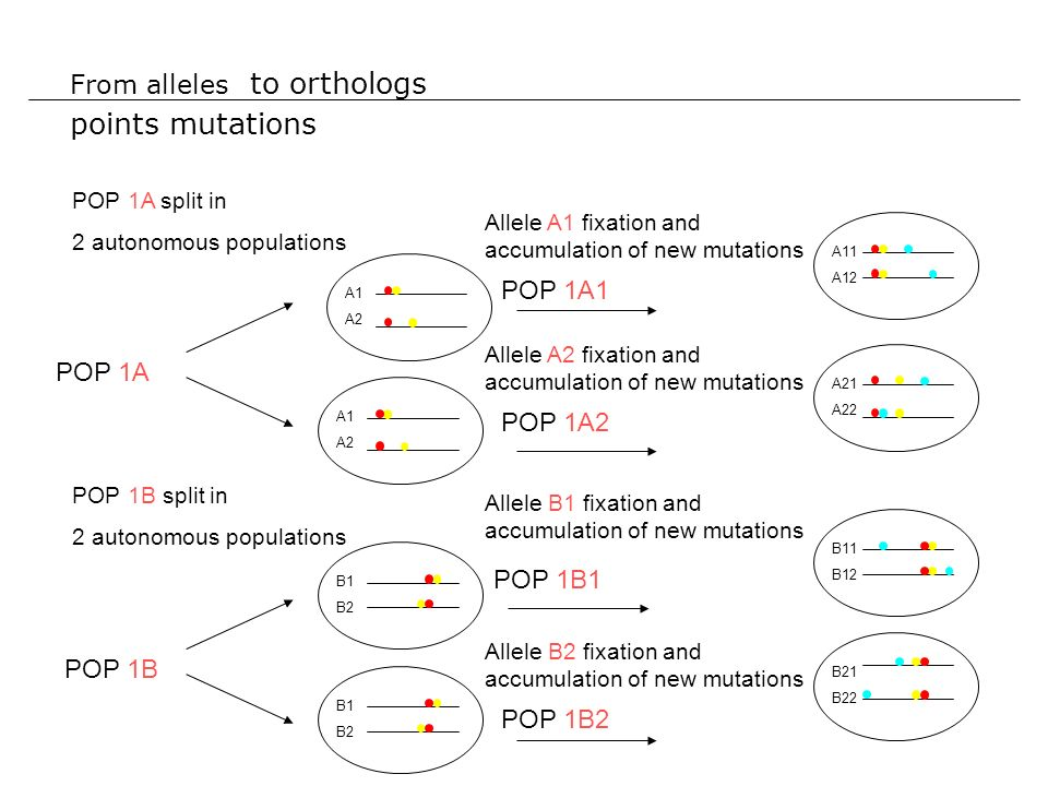From alleles to orthologs points mutations