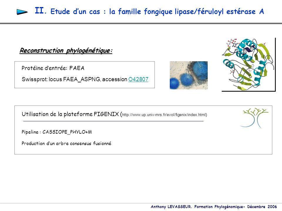 Anthony LEVASSEUR. Formation Phylogénomique- Décembre 2006