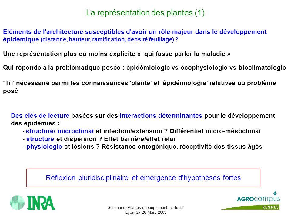 La représentation des plantes (1)