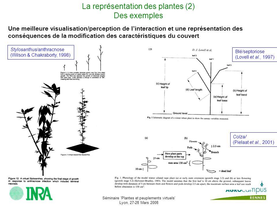 La représentation des plantes (2) Des exemples