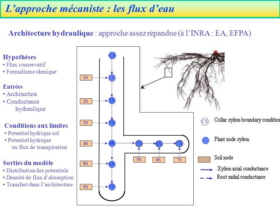 L'approche mécaniste : les flux d'eau
