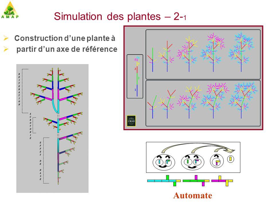 Simulation des plantes – 2-1