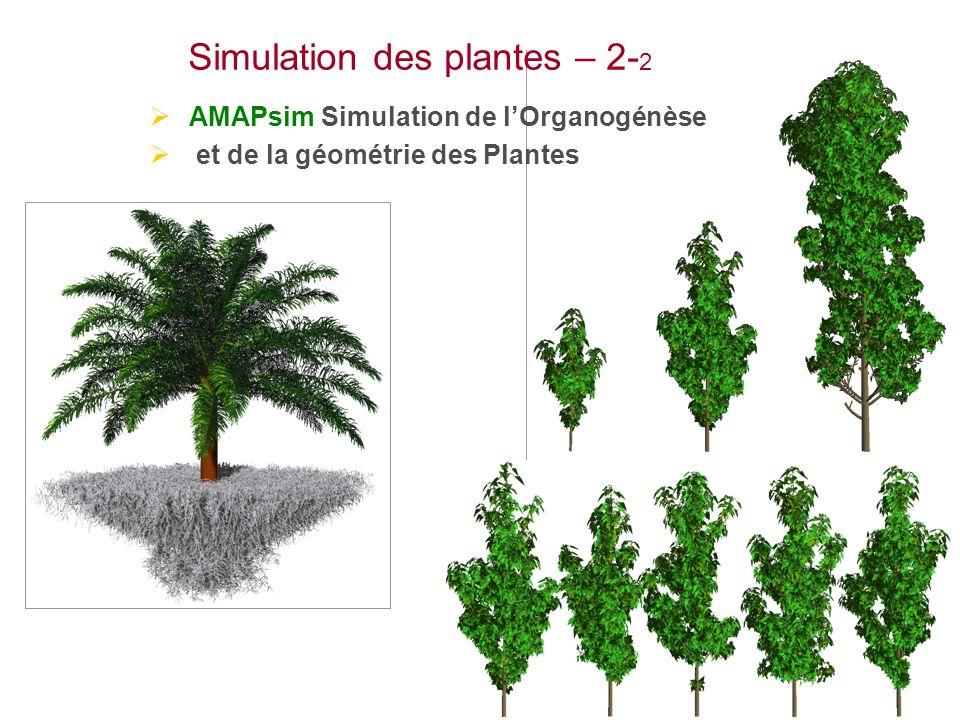 Simulation des plantes – 2-2