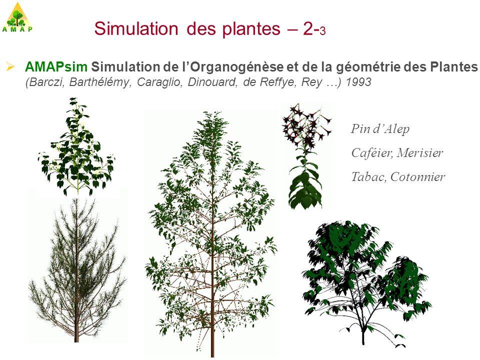 Simulation des plantes – 2-3