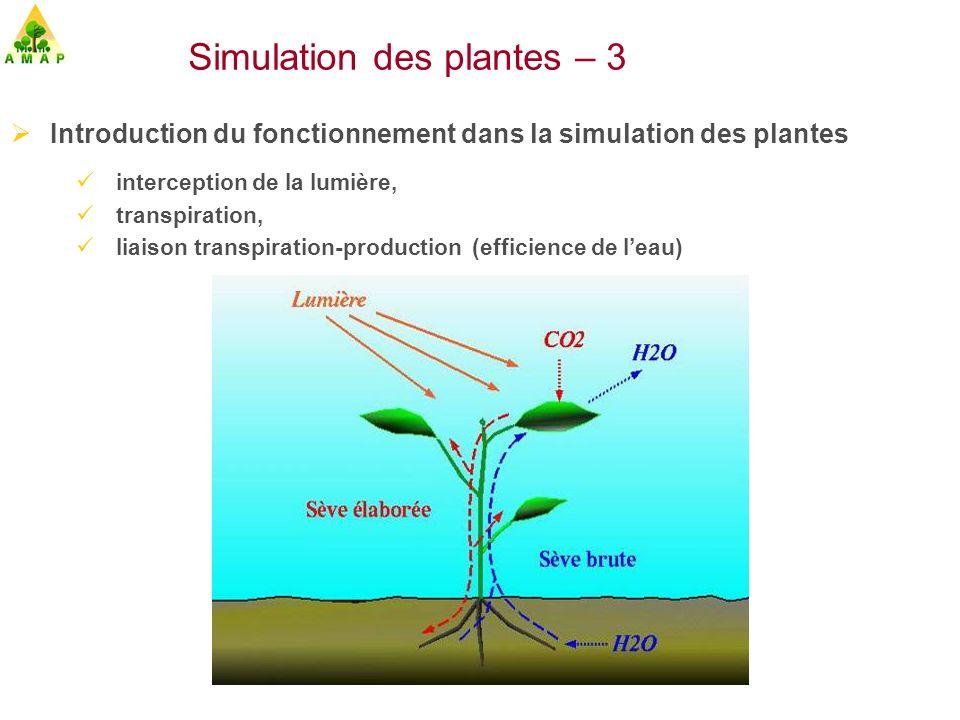 Simulation des plantes – 3