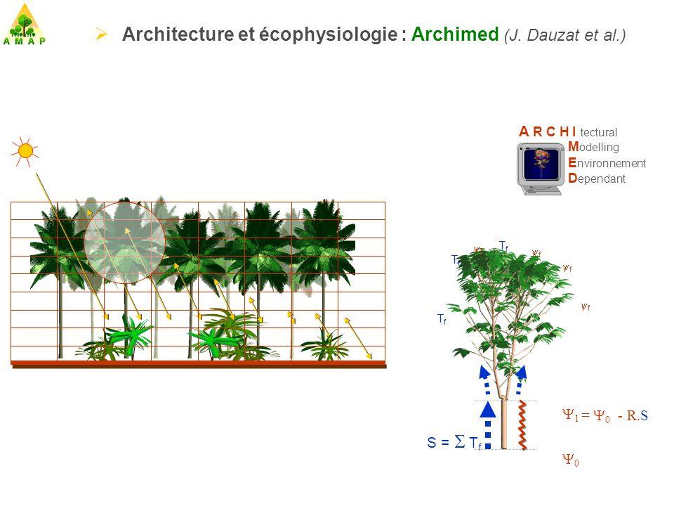Architecture et écophysiologie : Archimed (J. Dauzat et al.)