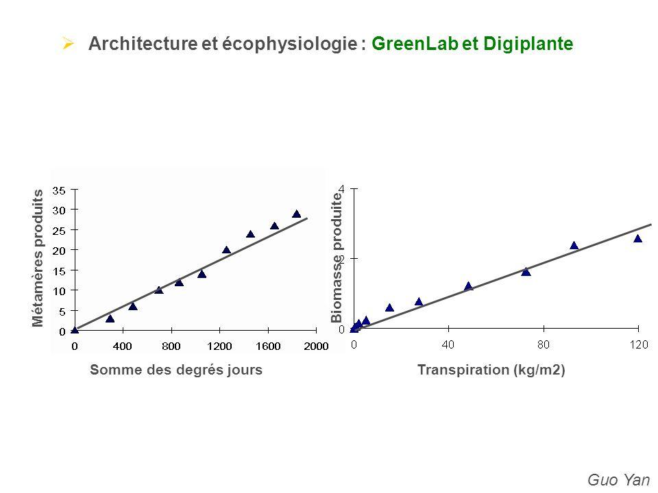Architecture et écophysiologie : GreenLab et Digiplante
