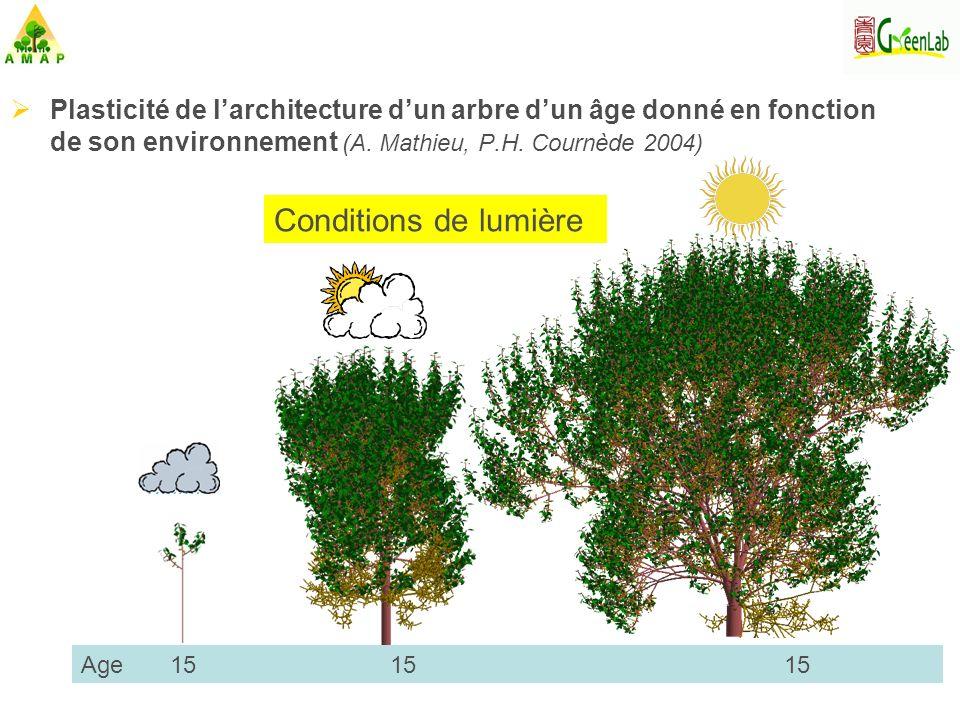 Plasticité de l'architecture d'un arbre d'un âge donné en fonction de son environnement (A. Mathieu, P.H. Cournède 2004)
