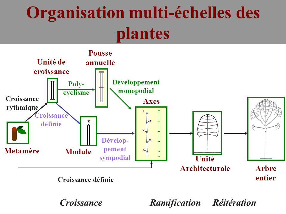 Organisation multi-échelles des plantes Développement monopodial